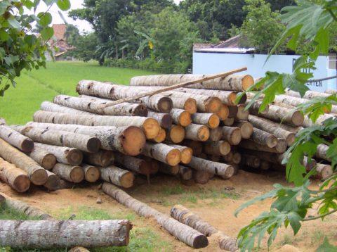 人に優しい木材(木材の調湿作用)