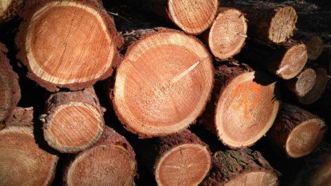 腐りにくい木と腐りやすい木⑴